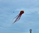 Cerf-volant de Dieppe  2018_50