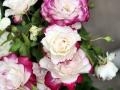 Fête des roses 2017_18