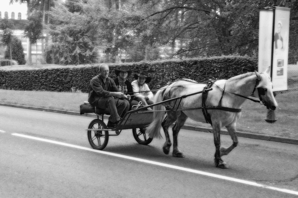 fete-du-cheval10