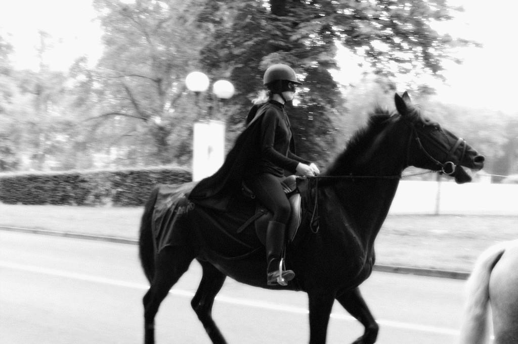fete-du-cheval13