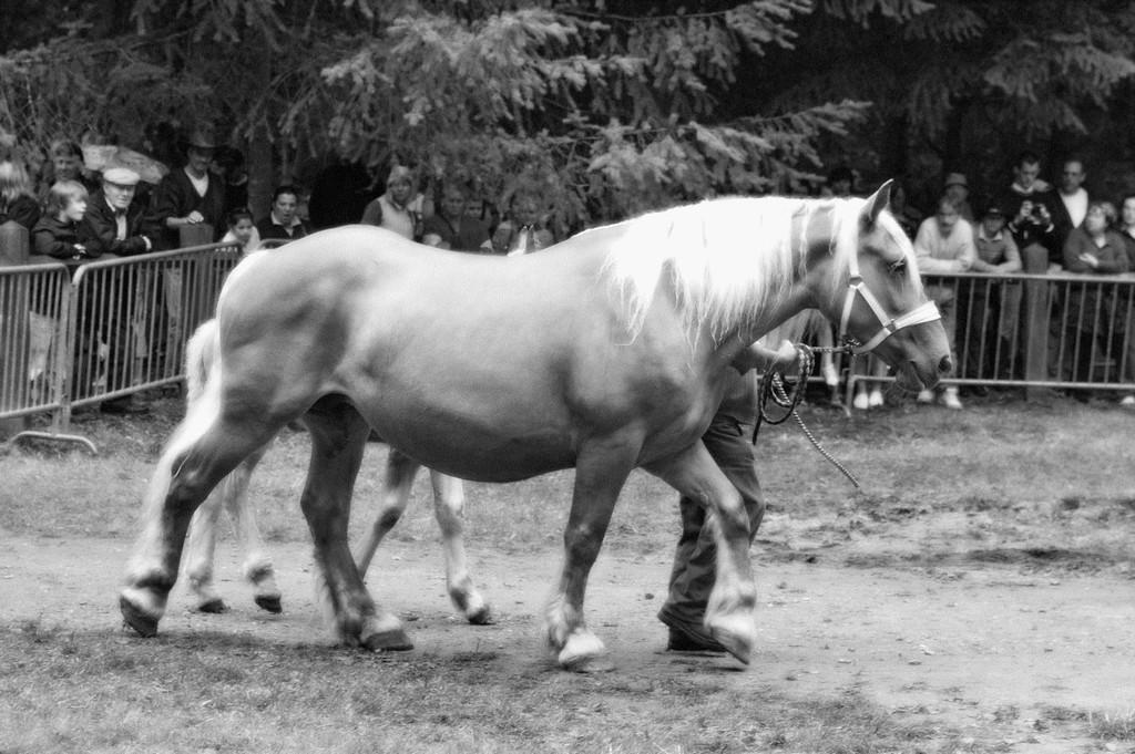 fete-du-cheval18