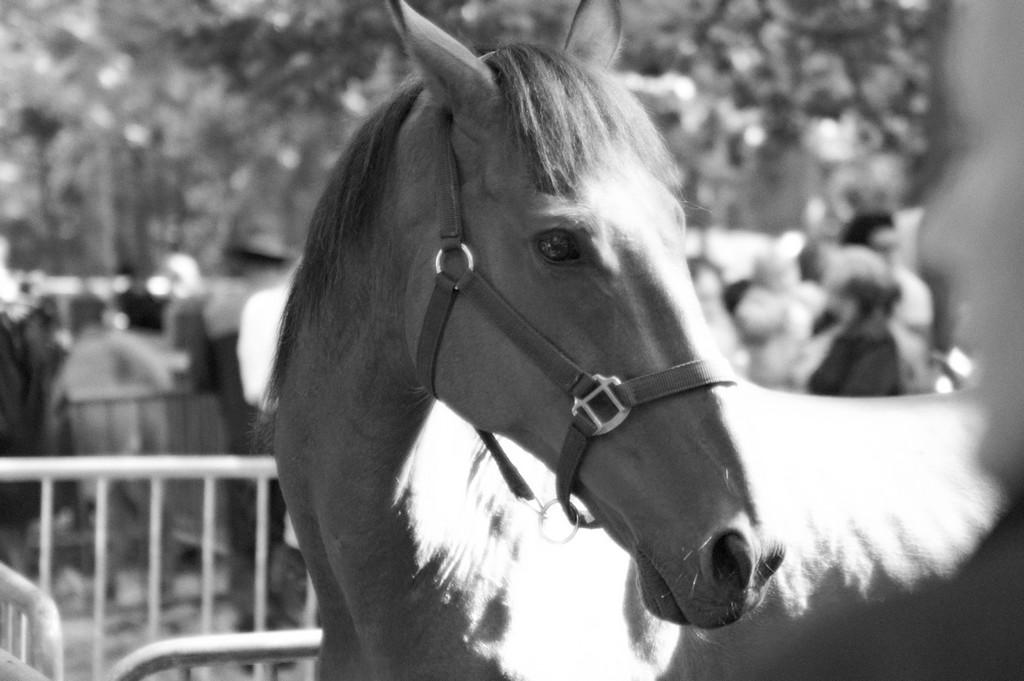 fete-du-cheval31