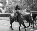 fete-du-cheval16