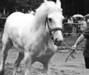 fete-du-cheval19