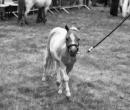 fete-du-cheval28