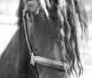 fete-du-cheval29