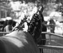 fete-du-cheval30