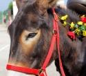 Fete du cheval01