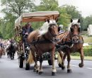 Fêtes du cheval 2018_32