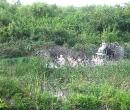florida-et-golfe-du-mexique43