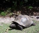 seychelles17